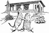 Prairie Dogs Children Coloring Dog Supply Example Tpwd Tx State sketch template