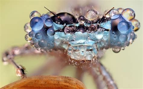 Dew Covered Insects Photographed By Ondrej Pakan Amusing