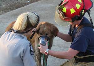 78+ images about Pet Oxygen Masks on Pinterest | Two dogs ...