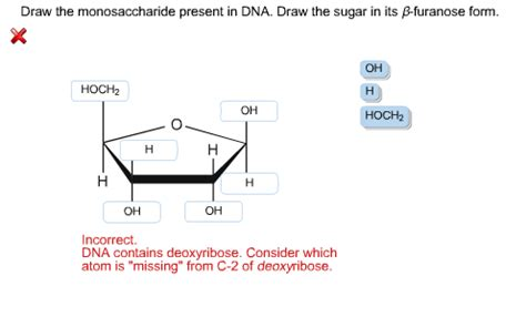 solved draw the monosaccharide present in dna draw the s