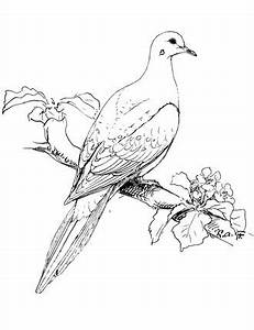 Doves Drawing at GetDrawings.com | Free for personal use ...