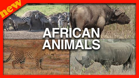 African Animals for Kids Animals from Africa for