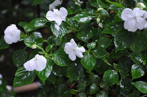 fleurir un balcon 224 l ombre conseils et s 233 lection de plantes