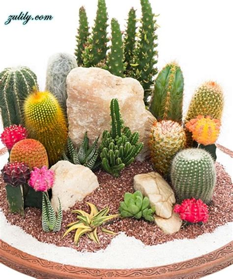 25 best ideas about mini cactus on mini