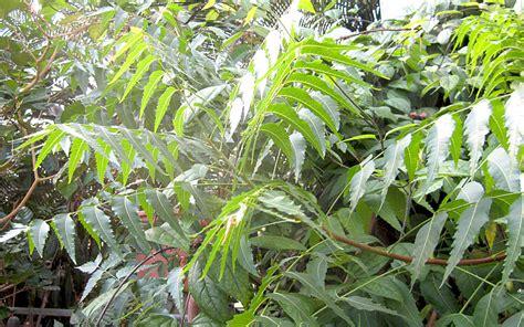 Welche Pflanzen Im Herbst Pflanzen by Welche Pflanzen Kann Im Herbst Pflanzen Welche