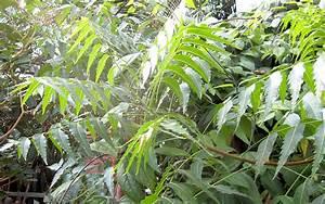 Welche Blumen Kann Man Essen : welche pflanzen kann man im herbst pflanzen welche ~ Watch28wear.com Haus und Dekorationen