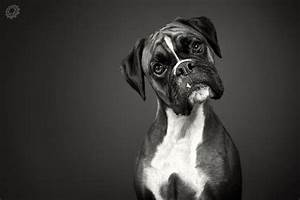 Quizzical Look... | Boxers | Pinterest