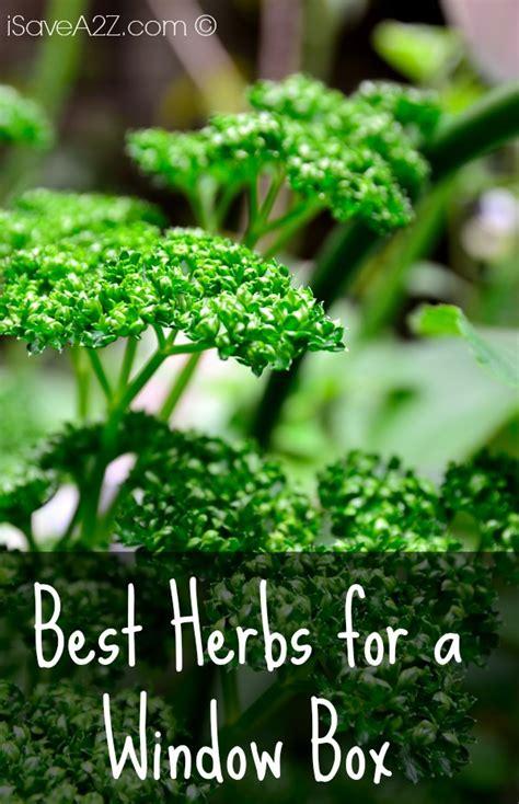 Best Herbs For A Window Box Isavea2zcom