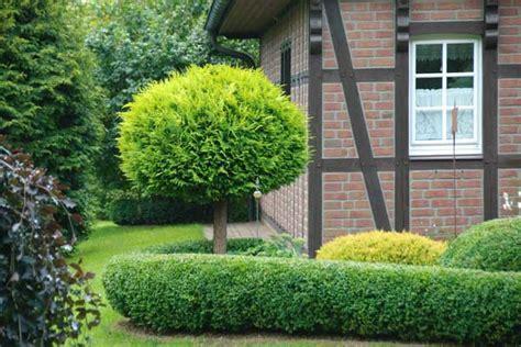 Kleine Bäume Mit Runder Krone Ideal Für Kleine Gärten