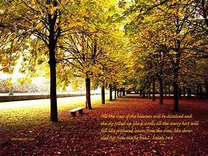 Fall Trees Wallpaper - Christian Wallpapers and Backgrounds