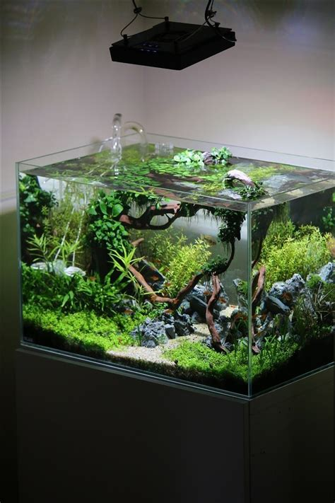 Fish Tank Aquascape Designs by 908 Best Images About Aquarium Fish Tank Aquascape