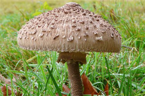 was kann gegen pilze im garten tun essbare pilze im garten