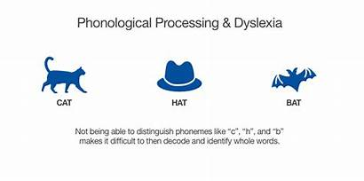 Phonological Dyslexia Processing Disabilities Learning Example Cat