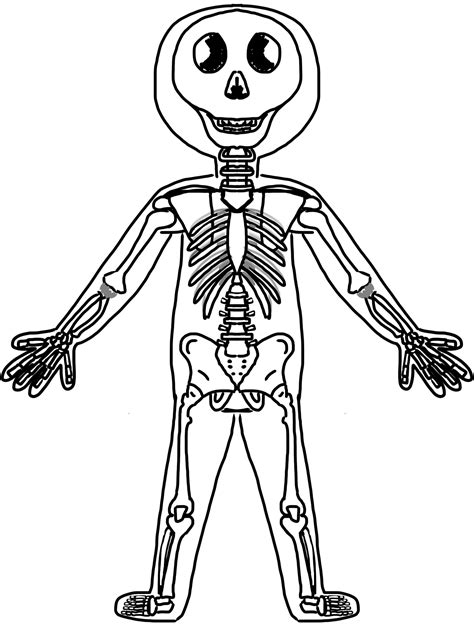 muscular system cliparts   clip art