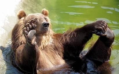 Grizzly Bear Funny Wallpapers Desktop 1200 Bears