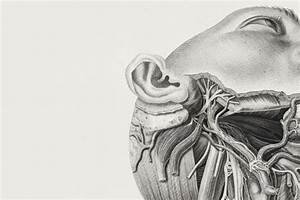 Under the skin: illustrating the human body | RCP London