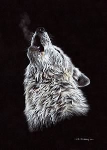 White Wolf Pencil Drawing Drawing by Sarah Stribbling