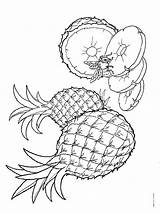 Pineapple Coloring Pages Fruits Printable Recommended sketch template