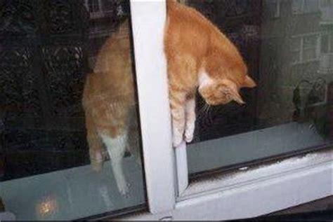 kippfenster die toedliche gefahr fuer katzen die