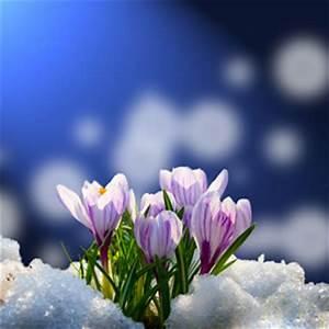 Was Sind Frühlingsblumen : die sch nsten fr hlingsblumen arten fotos ~ Whattoseeinmadrid.com Haus und Dekorationen