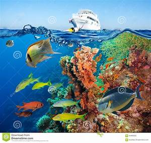 Colorful Underwater Reef With Coral And Sponges Stock ...