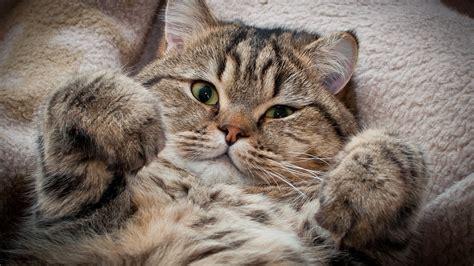 Funny Cat Wallpapers For Desktop (69+ Images