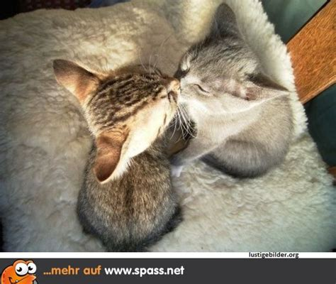 den ersten kuss vergisst man nie lustige bilder auf
