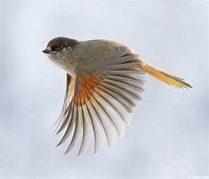 Flying Birds Wallpapers - HD Wallpapers