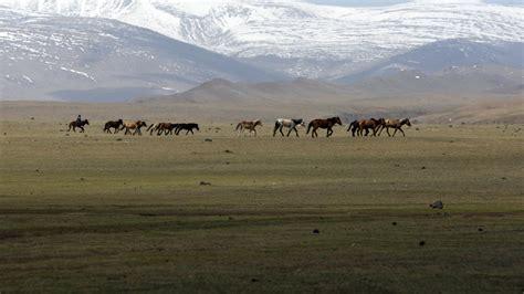 mongolia steppe animals hills horses wallpaper