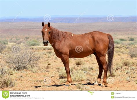 wild horse african landscape horses preview