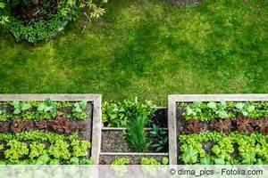 Blumenkohl Pflanzen Abstand : mischkulturtabelle diese gem sesorten vertragen sich ~ Whattoseeinmadrid.com Haus und Dekorationen