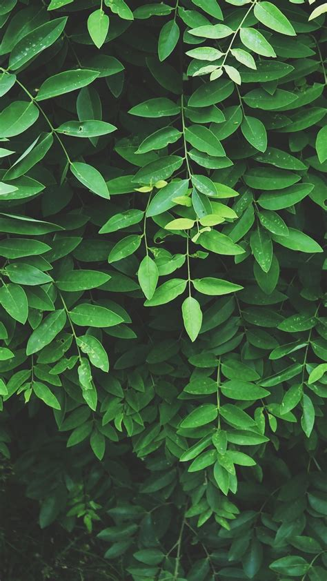 Aesthetic Olive Green Wallpaper Iphone by Grey And Green Aesthetic Wallpapers Top Free Grey And