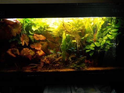 vend aquarium eau douce 200l complet 93 giboule93