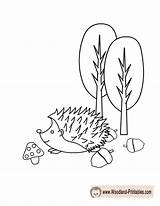 Coloring Pages Woodland Hedgehog Printable Animals Cute Animal Printables Forest Colouring Adorable Classroom Getdrawings sketch template