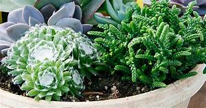 Plantes Grasses Extérieur : 1 garden planting ideas find indoor garden planting ~ Dallasstarsshop.com Idées de Décoration
