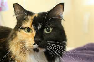 cat md maryland state cat calico cat