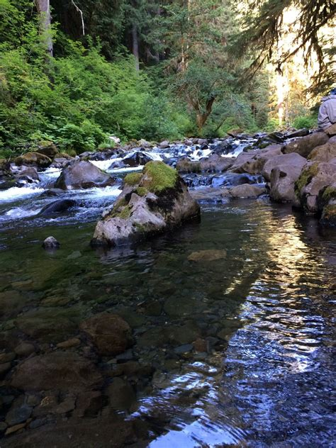 sol duc falls nature trail washington alltrails