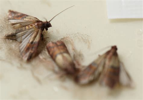 i have moths in my kitchen room image and wallper 2017