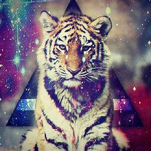 #Tiger #triangle #colors #hipster #wild #instagramers # ...