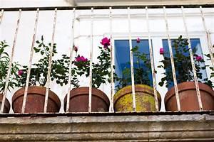 Rosen Für Balkon : rosen auf dem balkon halten so gelingt 39 s ~ Michelbontemps.com Haus und Dekorationen