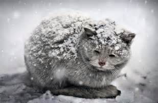 how cold is cold for cats bowmanville veterinary clinic baby it s cold outside