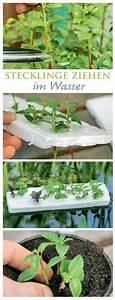 Pflanzen Gießen Urlaub : automatische bew sserung um die pflanzen ber den urlaub ~ Lizthompson.info Haus und Dekorationen