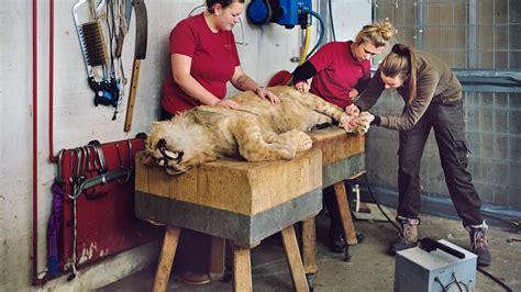 animals zoo killing social