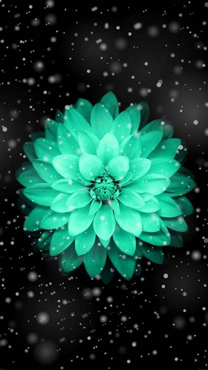 Teal Iphone Wallpapers Flower Backgrounds Wallpaperaccess