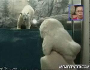 Polar Bear Attacks Seal by akezu - Meme Center