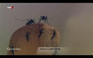 Wie gefährlich ist das Zika-Virus? – judith könig