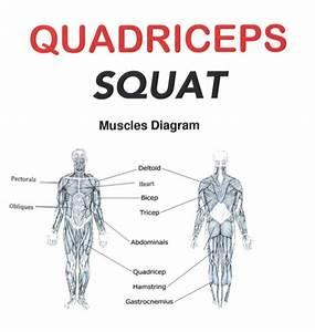 3rd Grade Muscle Diagrams