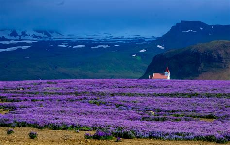 free of alpine beautiful bloom