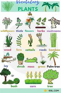 Plant Names: List Of Common Types Of Plants And Trees - 7 ...
