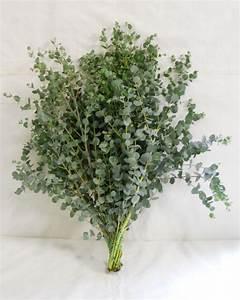 Gunni Eucalyptus